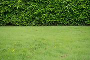 Organic lawn care management
