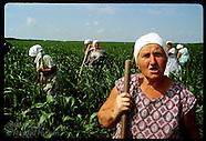 03: COLLECTIVE FARM WOMEN IN FIELD