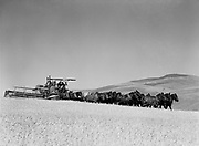 9969-4282. Harvesting wheat with a combine pulled by twenty-one head of horses, on a farm near The Dalles, Oregon. July 24, 1939