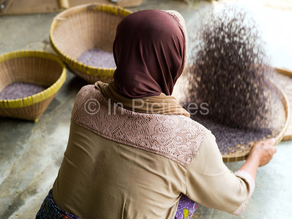A Sasak woman cleans black sticky rice outside her home in Tetebatu, Lombok, Indonesia. The predominantly Muslim Sasak people are the native inhabitants of Lombok where they form 85% of the population.