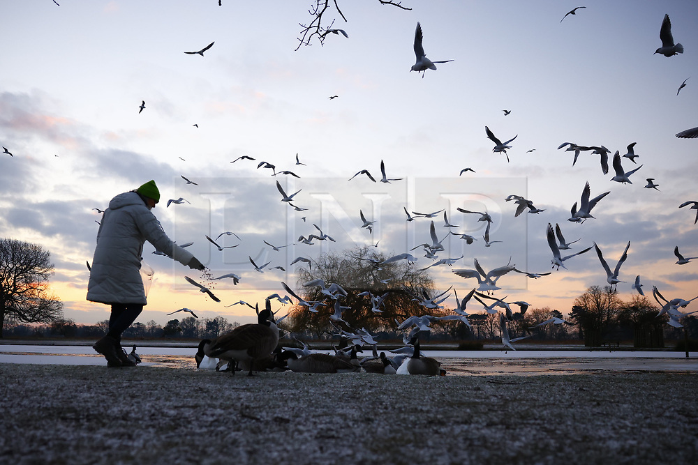 © Licensed to London News Pictures. 11/02/2021. London, UK. A woman feeds the birds at a freezing Bushy park in south west London. Overnight temperatures reached -5C in parts of the south east. Photo credit: Peter Macdiarmid/LNP