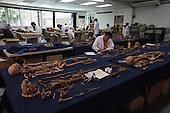 The FAFG: Forensic Anthropology Foundation of Guatemala