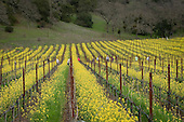 Napa & CA scenics for Michelle Mandro