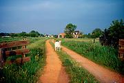 Oude Leedeweg, Pijnacker, provincie Zuid Holland. © Holland Kodak Ektar serie