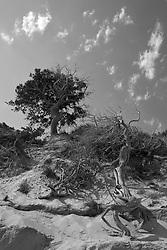 Dune Torre guaceto