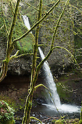 Upper Horsetail (Ponytail) Falls (~100 foot plunge) is a one-mile round trip walk, on Horsetail Creek, in Columbia River Gorge National Scenic Area, Oregon, USA.