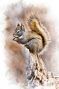 An artistic rendered photograph of a red squirrel on a stump, done in a watercolor style.