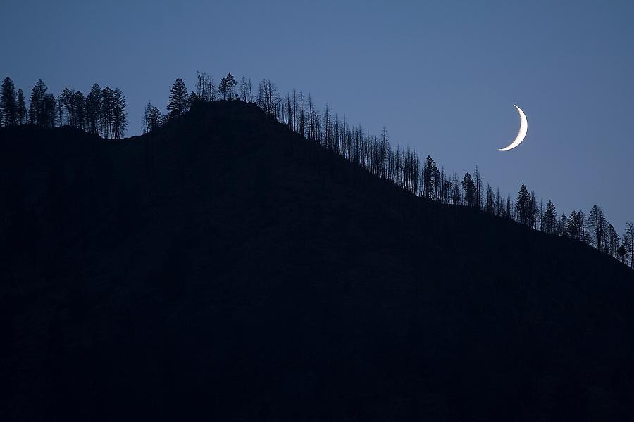 The crescent moon illuminates a tree covered ridge in the Frank Church - River of No Return Wilderness, Idaho.