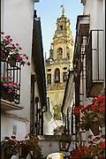 Spanje, Cordoba, 6-5-2010Festival de los Patios. Bewoners van de oude stad met een patio, hebben hun binnenplaats, met bloemen en planten versierd. Cordoba staat in mei bekend om zijn mooi aangekleedde binnenplaatsen en balkons. Het trekt veel toeristen. Calle de flores. Op de achtergrond de toren van de kathedraal, mesquita.Residents of the old city with a patio, have their courtyard, decorated with flowers and plants. Cordoba in May is known for its beautifully decorated courtyards and balconies. It attracts many tourists.Foto: Flip Franssen/Hollandse Hoogte