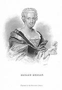 Maria Sibylla Merian (1647-1717) German naturalist and flower painter. Engraving