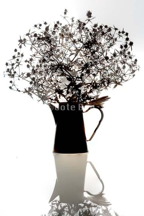 silhouette still life of wild plants in a old style coffee can