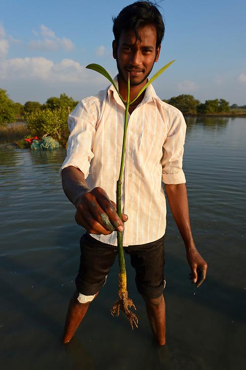 Mangrove planting team from CRINEO planting Rhizophora mangrove trees, Pulicat Lake, Tamil Nadu, India
