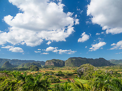 North America, Caribbean, Cuba, Vinales, tobacco fields and limestone hills (magotes).  The Vinales Valley is a UNESCO World Heritage Site