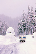 Winter Visitor,Crater Lake National Park, Oregon