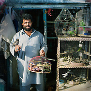 Freydeen , Bird seller , for fifteen years, poses for the camera at Kabul's bird market , Ka Farushi<br /> <br /> The market is a narrow lane crammed with stalls and tiny open-fronted shops where shop keepers sell birds of all descriptions -  canaries, budgerigars, songbirds and pigeons as well as specially trained fighting birds like quails and partridges.  There is a long tradition of bird keeping in Afghanistan. Although it was banned under the Taliban, the market is once again vibrant and alive with the sounds of birdsong