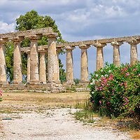 Metapontion. Basilicata. Italy. View along a pathway lined with colourful plants of the majestic Greek Doric Temple of Hera. Known as the Tavole Palatine, the elegant peripteral temple was built around the mid-6th century BC as a sanctuary dedicated to the goddess Hera, 3 kilometres from the ancient Greek urban centre of Metapontum on the Ionic coast of Basilicata in southern Italy. It has 15 Doric fluted columns still upright from its original 32 (6 x 12) and is one of the best preserved monuments of Magna Graecia (Greater Greece).