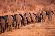 Elephant Herd<br />