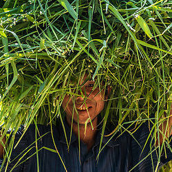 It's said that Myanmar has the most favorable agricultural conditions in all of Asia. This image shows a man carrying his fresh hay back home to dry. Somewhere in the rural area along the Chindwin river. <br /> <br /> Agriculture is the backbone of the Myanmar economy: the sector accounts for about 30% of GDP, over 50% of total employment