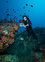 Sylvia Earle Diving in the Seychelles.