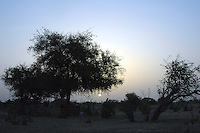 Niger, Agadez, Tidene, 2007. At twilight, a Tuareg nomad's camp is barely distinguishable from the natural materials from which it is made.