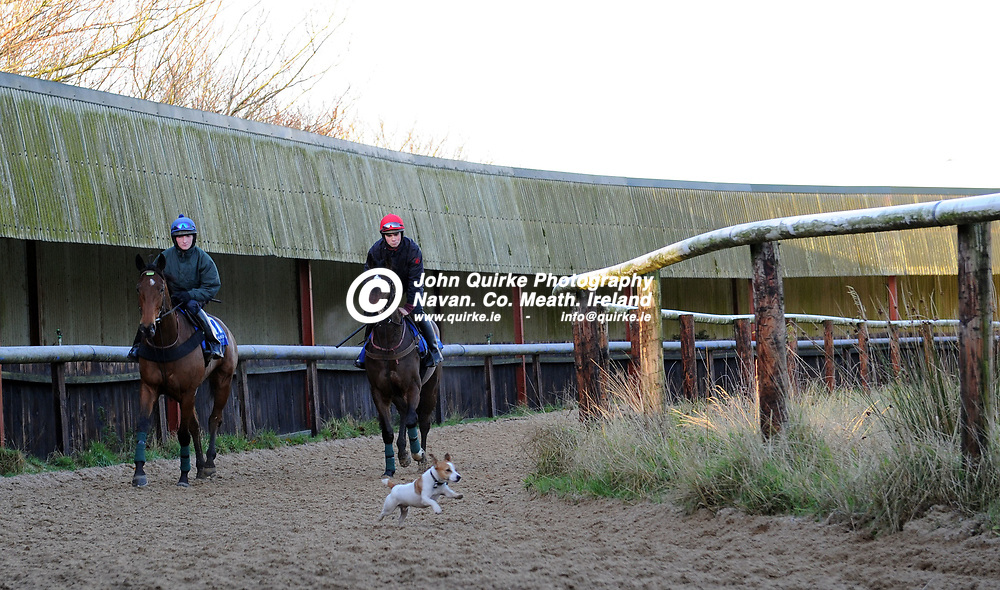 """04-12-12. Launch of Steller Leopardstown Christmas Festival and Media Morning at Noel Meade, Tu Va Racing Stables, Castletown, Navan.<br /> Davy Condon's dog """"Duggy"""" showing the way around the all-weather track.<br /> Photo: John Quirke / www.quirke.ie<br /> ©John Quirke Photography, Unit 17, Blackcastle Shopping Cte. Navan. Co. Meath. 046-9079044 / 087-257945."""