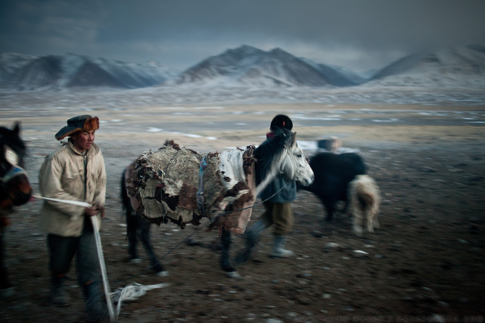 A Kyrgyz man, Abdul Basir, bringing the trader's horses back for the night. At the Andemin camp...Trekking through the high altitude plateau of the Little Pamir mountains, where the Afghan Kyrgyz community live all year, on the borders of China, Tajikistan and Pakistan.