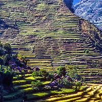 Rise paddies rise above the Marsyandi River in Nepal.