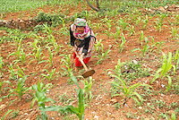 Vietnam. Haut Tonkin. Region de Bac Ha. Travaux des champs. Ethnie Hmong fleur. // Vietnam. North Vietnam. Bac Ha area. Fields work. Flower Hmong ethnic group.
