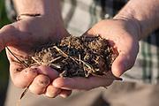 Loess soil