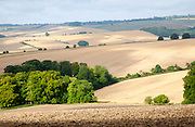 Rolling countryside arable fields in summer on chalk downland near Aldbourne, Wilsthire, England, UK