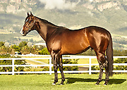 What a Winter, stallion photographed of Drakenstein Farm. Conformation image by BeadlePhoto