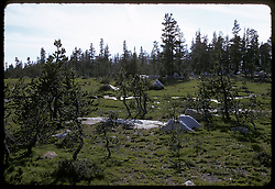 Meadow, Young Lakes, Yosemite National Park. View shot on Kodachrome II, Nikon Ftn camera,Nikkor 35mm f/2 lens 60th f/8, 31 July 1973