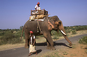 Milkman delivers milk on an elephant Photographed in Rajasthan, India