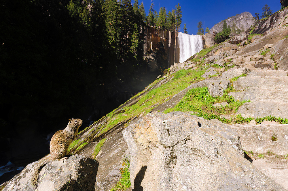 Vernal Falls and squirrel on the Mist Trail, Yosemite National Park, California USA