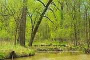 Seine River Forest.<br />Winnipeg<br />Manitoba<br />Canada