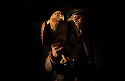 Durmas brings in an injured falcon to the mayors office  December 13, 2005 in central Turkey, Konya in Kutoren district, about 400 kilometers from Ankara. Ami Vitale)