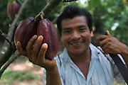 Fernando Machado, Ngäbe man and member of COCABO, harvests cocoa pods. COCABO: Valle de Agua Arriba, Almirante, Changuinola, Bocas del Toro, Panamá. September 1, 2012.