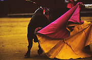 """Pass.Matador and bull in La Real Maestranza..Bullfighting in Sevilla's famous bullring """"La Real Maestranza"""" is a significant part of the Feria de Abril..The Feria de abril de Sevilla, """"Seville April Fair"""" dates back to 1847. During the 1920s, the feria reached its peak and became the spectacle that it is today. It is held in the Andalusian capital of Seville in Spain. The fair generally begins two weeks after the Semana Santa, Easter Holy Week. The fair officially begins at midnight on Monday, and runs six days, ending on the following Sunday. Each day the fiesta begins with the parade of carriages and riders, at midday, carrying Seville's citizens to the bullring, La Real Maestranza. Seville. Andalusia. Spain...Blood sport ending in the killing of a bull in front of thousands of spectators. An entertainment and tradition derived from the ancient gladiatorial spectacles of Roman times. This activity is loved and defended by 'affecionados' who see the artistry and traditions whilst it is detested by animal rights activists, environmentalist and ecologists for its cruelty to animals"""