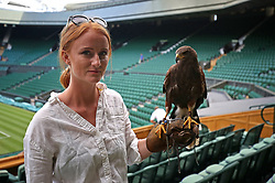 Rufus the Harris hawk, who is used to keep keep pigeons away from the tennis courts, with his handler Imogen Davis on day two of the Wimbledon Championships at the All England Lawn Tennis and Croquet Club, Wimbledon.