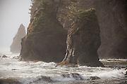 Sea stacks at Third Beach, Olympic National Park, Washington.