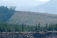 Scenic of clear cutting near Mt. Rainier National Park, WA.