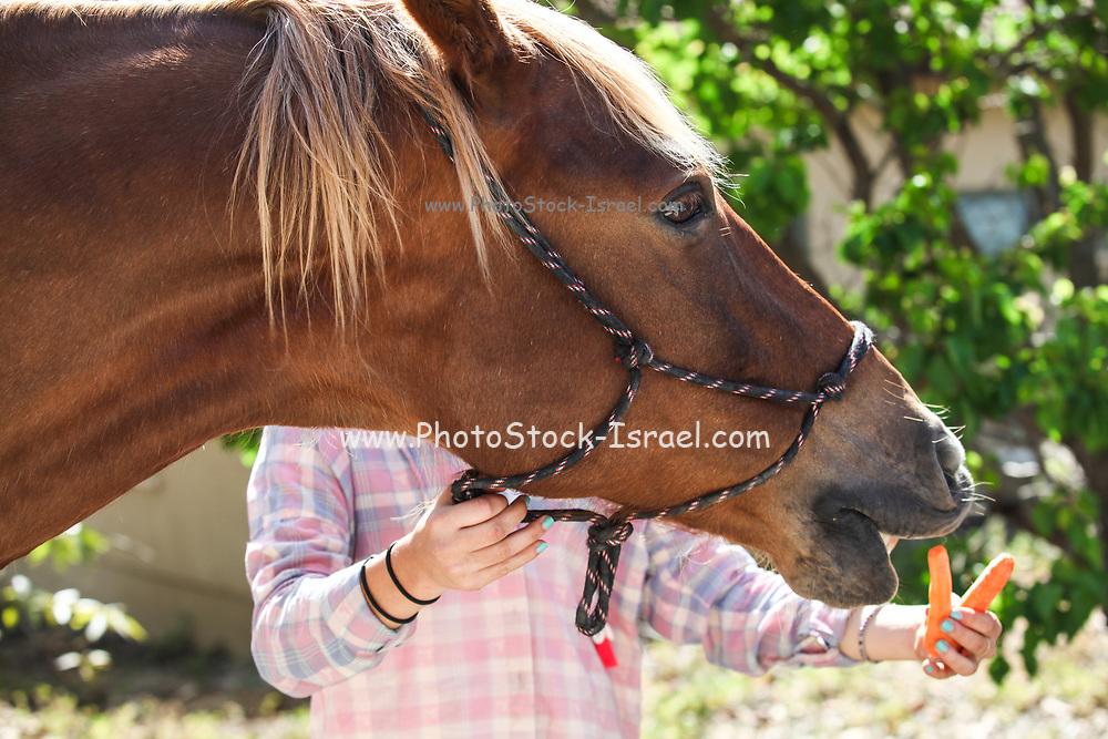 Teen feeds her horse a carrot