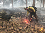 Larimer County Sheriff's Office firefighter Quinn de la Haye burns unburned fuel at the edge of a fireline as the East Troublesome Fire burns in Rocky Mountain National Park, October 24, 2020. © 2020 William A. Cotton