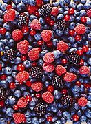 Blueberries, raspberries, blackberries and red currants for multiberry pie, Winterlake Lodge, Finger Lake, Alaska.
