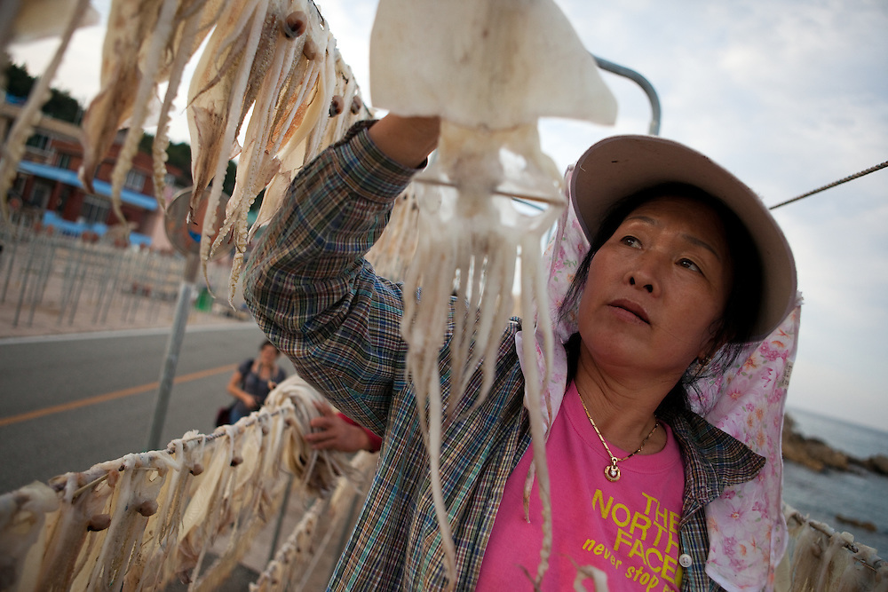 Korean village woman hanging cuttlefish on lines to dry out / South Korea, Republic of Korea, KOR, 04 October 2009.