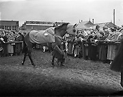"""08/03/1958<br /> 03/08/1958<br /> 08 March 1958<br /> Grand National entries at the Leopardstown Races. """"Mr. What"""" owned by Mr. D.J. Coughlan."""