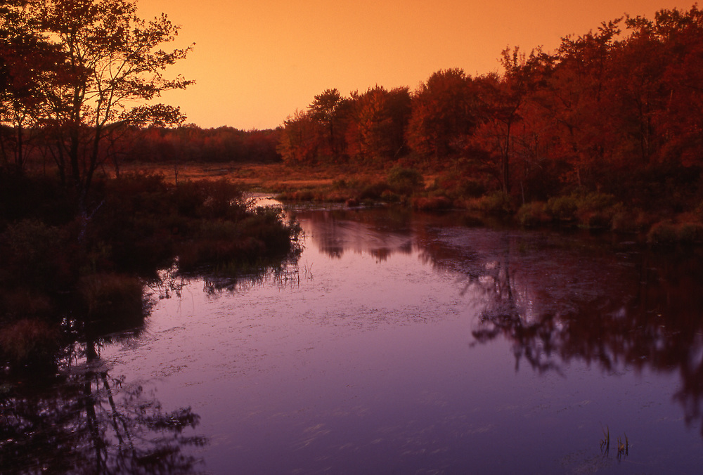 Autumn wetlands, eastern Pennsylvania, USA