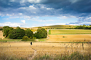 Female figure walking across large fields on the South Downs in Sussex, England, UK on a summers evening during harvest.
