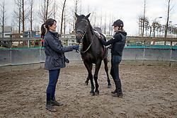 Balans en vertrouwen - Janina van der Drift<br /> Stal de Greef Moordrecht 2014<br /> © Dirk Caremans