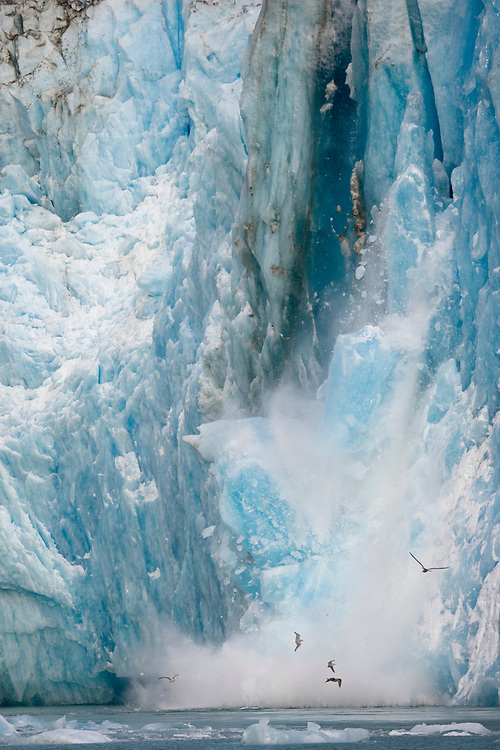 USA, Alaska, Tongass National Forest, Tracy Arm - Fords Terror Wilderness, Massive blue iceberg calving from South Sawyer Glacier in Tracy Arm